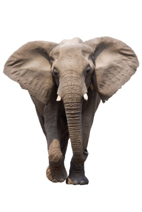The Female Elephant in the Room